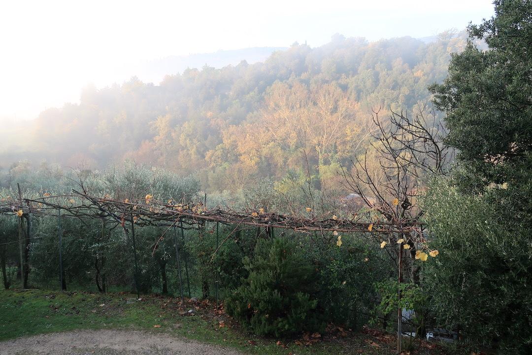 霧の秋夕空とカボチャ入りクリームシチュー_f0234936_06171793.jpeg