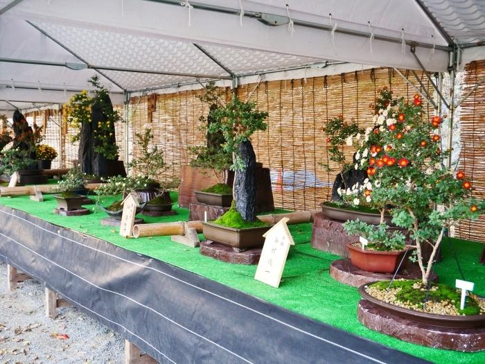 和歌山城公園菊花展  2020-11-28 00:000_b0093754_22531381.jpg