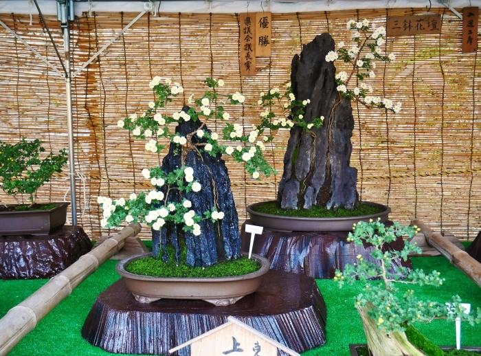 和歌山城公園菊花展  2020-11-28 00:000_b0093754_22532554.jpg