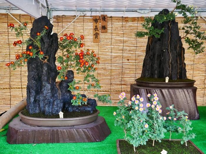 和歌山城公園菊花展  2020-11-28 00:000_b0093754_22533604.jpg