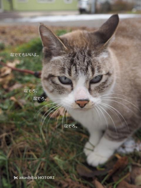 番猫 カーヴィさん_f0150377_18404748.jpg