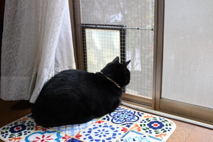 仔猫をぴゃーぴゃー鳴かせないでくださいと言う話_c0150193_18245037.jpg