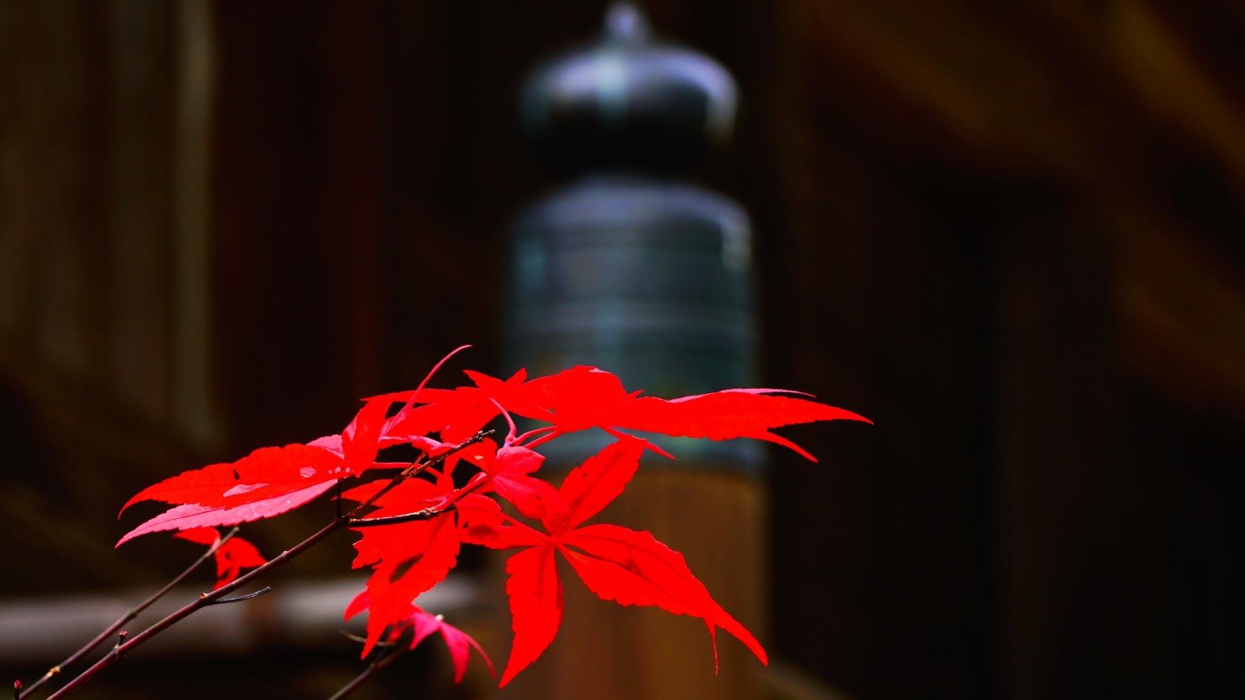 第28回 好きやねん大阪カメラ倶楽部 In 和歌山 例会報告 今月のテーマ 日本製カメラ_d0138130_16083881.jpg