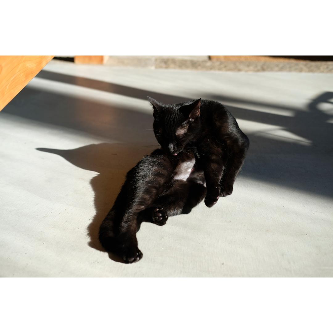 はぎれや古着で手軽に作る、猫の術後服。_d0227246_11193354.jpg