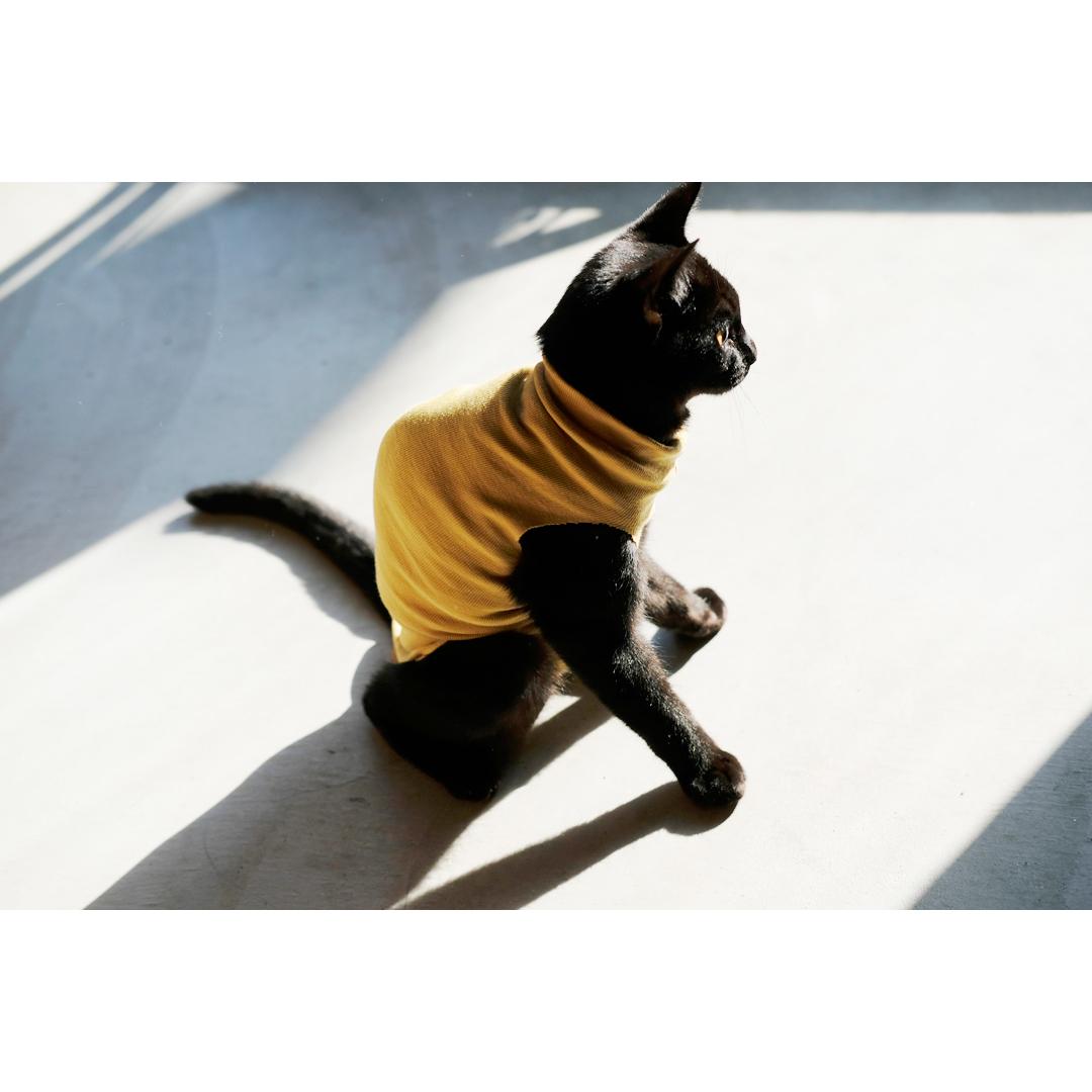 はぎれや古着で手軽に作る、猫の術後服。_d0227246_11193416.jpg