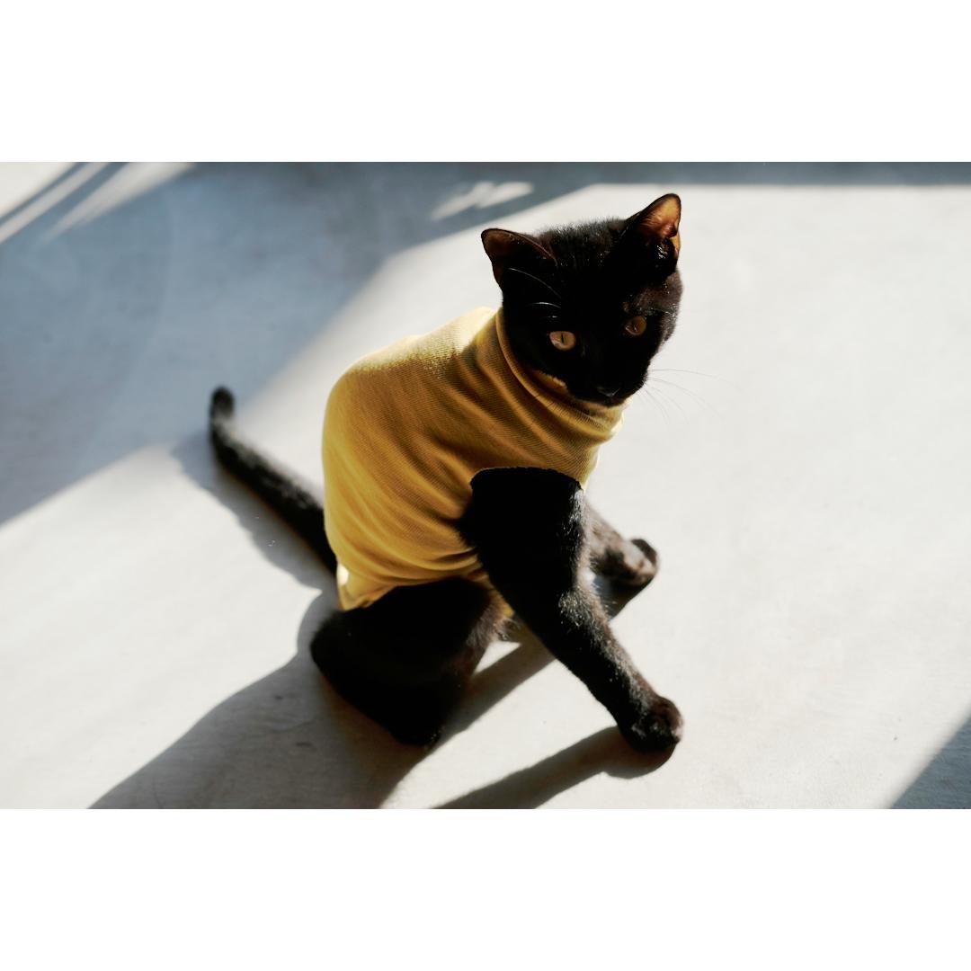 はぎれや古着で手軽に作る、猫の術後服。_d0227246_11193450.jpg