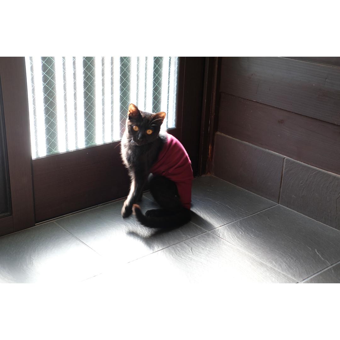 はぎれや古着で手軽に作る、猫の術後服。_d0227246_11193496.jpg