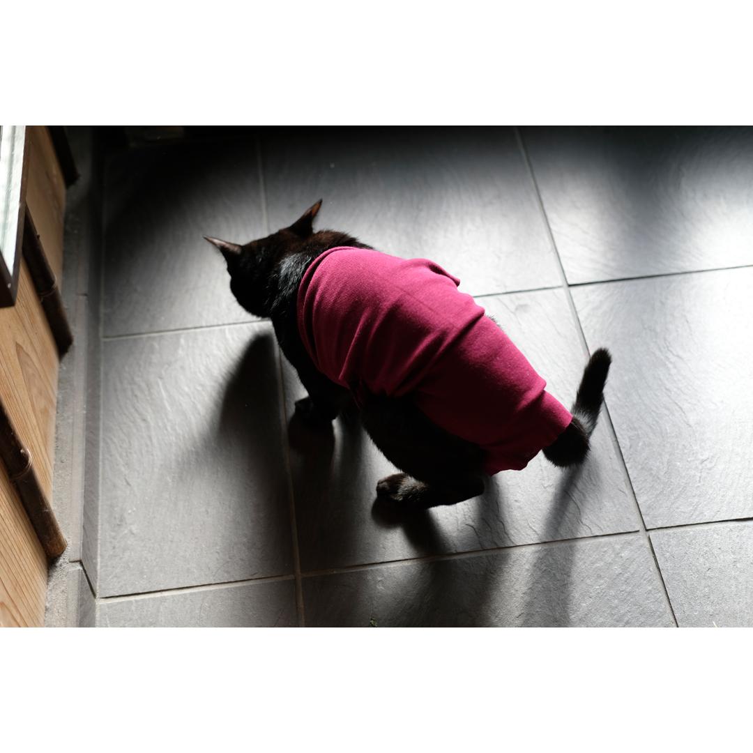 はぎれや古着で手軽に作る、猫の術後服。_d0227246_11325019.jpg