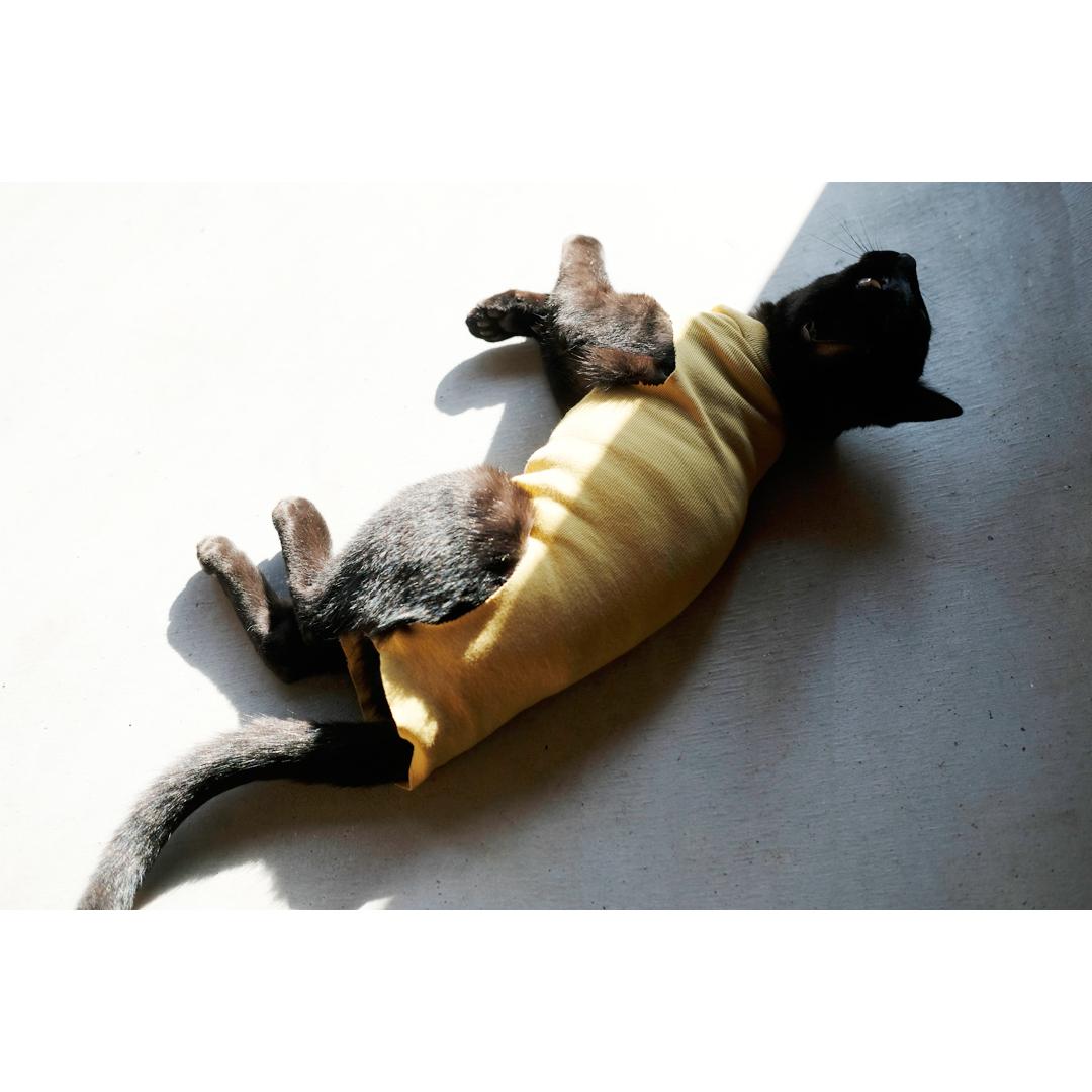 はぎれや古着で手軽に作る、猫の術後服。_d0227246_11523573.jpg