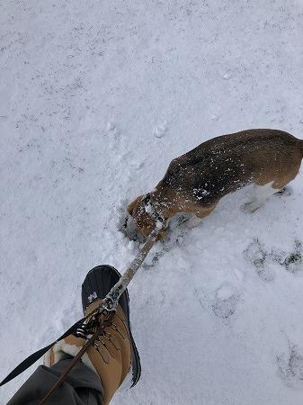 こつぶ・・初冬の散歩、河川敷編_d0251572_06362837.jpg