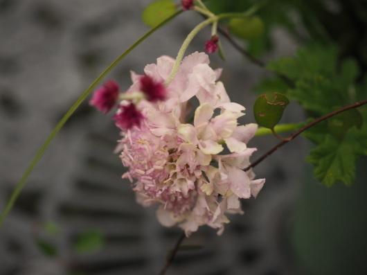 フラワーデザイン ロマンチックな花束_d0281783_09393647.jpg