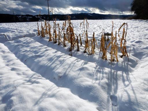 冬へ_d0366590_15292473.jpg