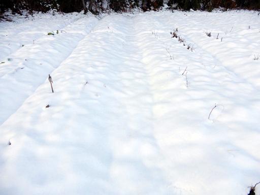 冬へ_d0366590_15293920.jpg