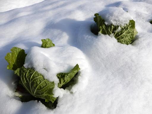 冬へ_d0366590_15295290.jpg