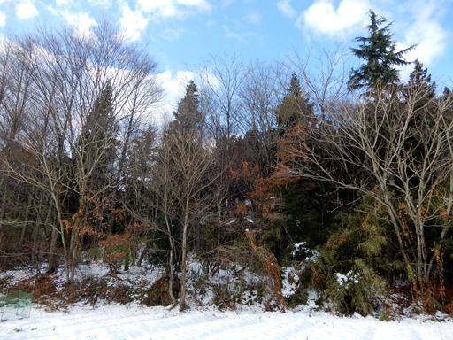 冬へ_d0366590_15300173.jpg