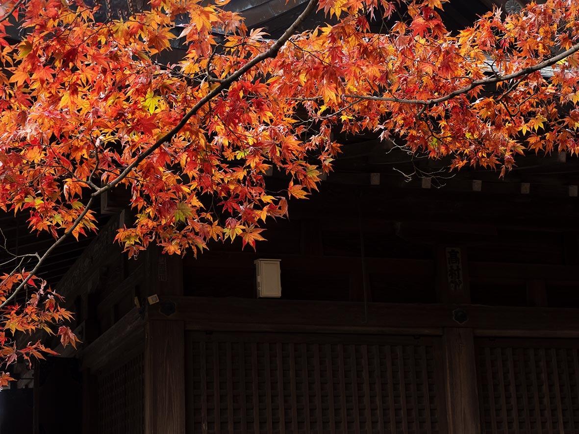 唐沢城址で紅葉撮り_f0224100_10372364.jpg