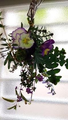 庭のビオラたち / 小さなブーケ_c0152002_11453356.jpg