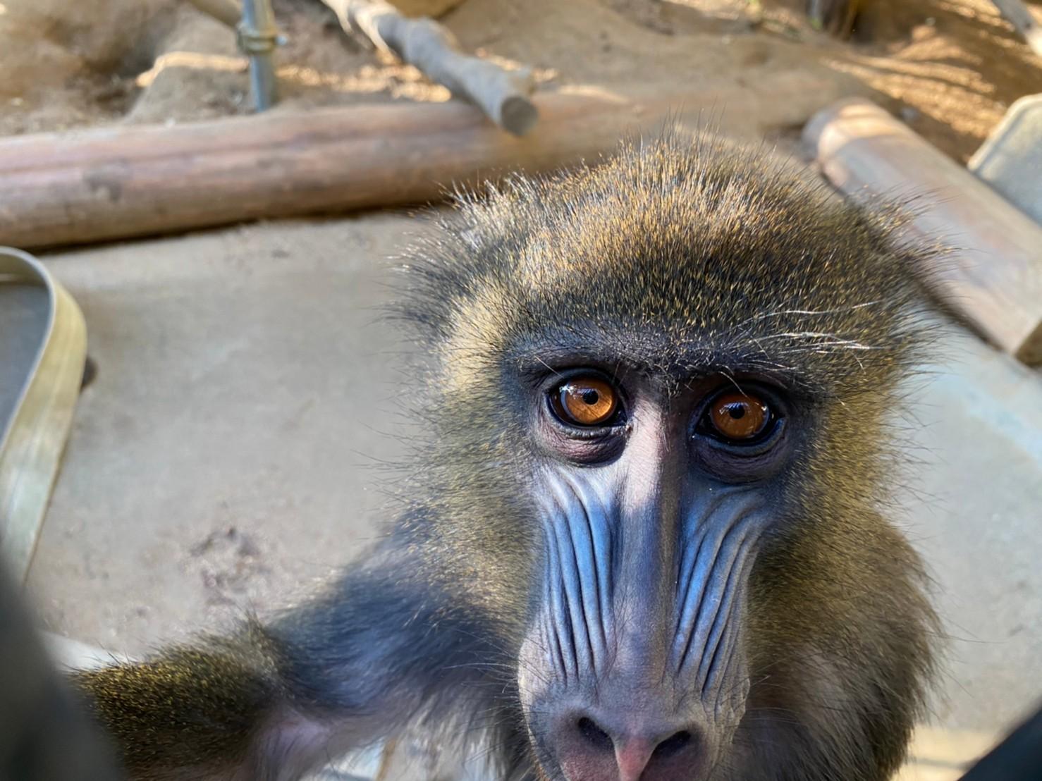 世界サルの日スペシャルイベントを行います!_c0290504_15042214.jpg