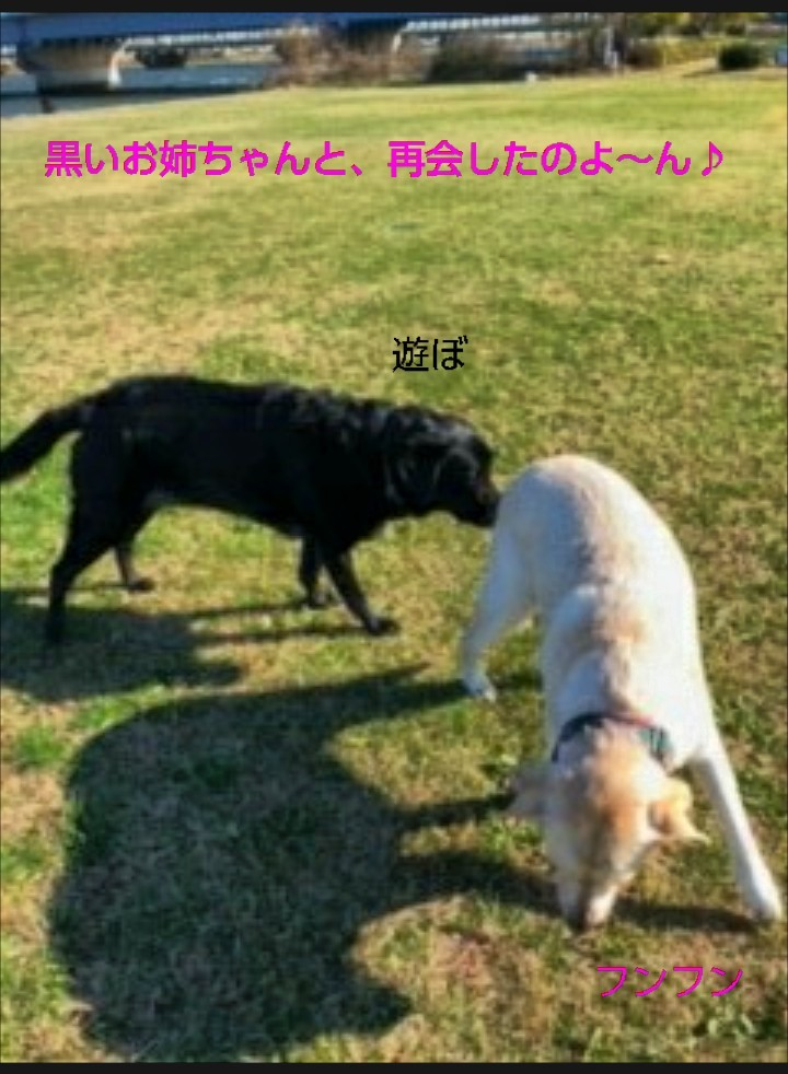 アンジュちゃんより、お友達レポート_b0339522_09423529.jpg