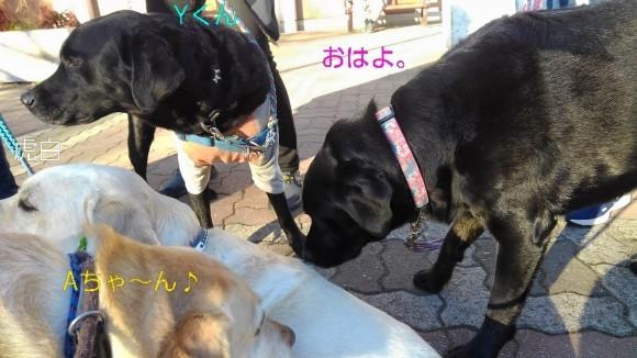 メリー、若者ラブ達と爆さんぽ_b0339522_11263547.jpg