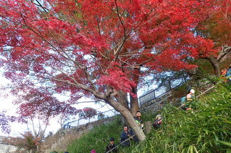 紅葉の登山道を散策『布引~修法が原~大師道』_c0218841_20420674.jpg