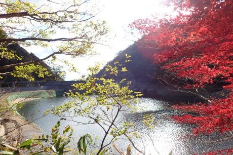 紅葉の登山道を散策『布引~修法が原~大師道』_c0218841_20424936.jpg