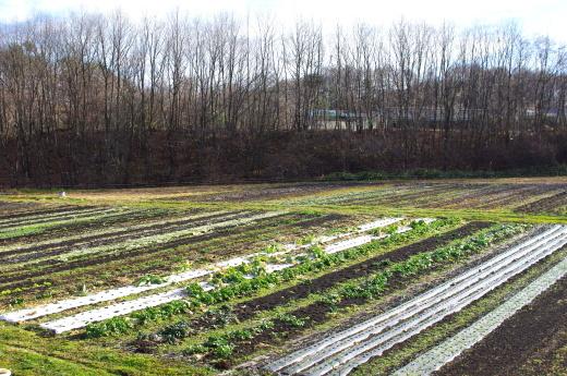 11月終わりの畑。_c0110869_10143839.jpg