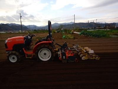小麦播種 今年も品種は農林61号_c0332682_21392132.jpg