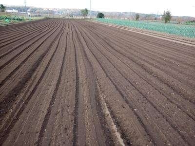 小麦播種 今年も品種は農林61号_c0332682_21392668.jpg