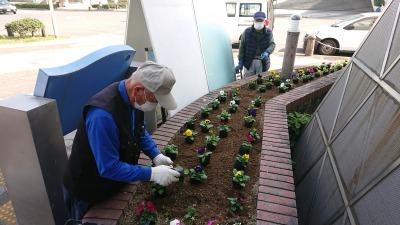 ガーデンふ頭総合案内所前花壇の植替えR2.11.16_d0338682_16562309.jpg