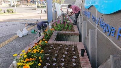 ガーデンふ頭総合案内所前花壇の植替えR2.11.16_d0338682_16590942.jpg