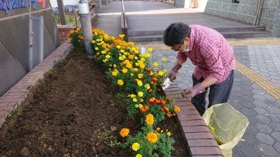 ガーデンふ頭総合案内所前花壇の植替えR2.11.16_d0338682_16593440.jpg