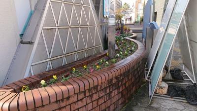 ガーデンふ頭総合案内所前花壇の植替えR2.11.16_d0338682_17020589.jpg