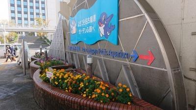 ガーデンふ頭総合案内所前花壇の植替えR2.11.16_d0338682_17024277.jpg