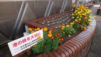 ガーデンふ頭総合案内所前花壇の植替えR2.11.16_d0338682_17031796.jpg