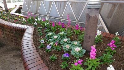 ガーデンふ頭総合案内所前花壇の植替えR2.11.16_d0338682_17033560.jpg