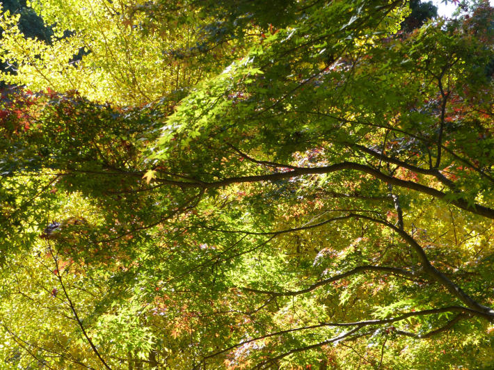 鎌倉散策11月 建長寺_f0296312_16585617.jpg