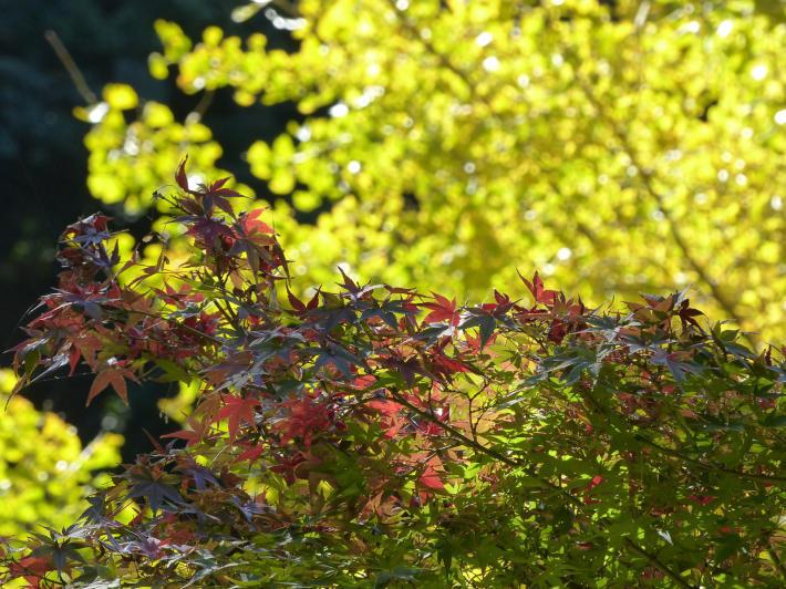 鎌倉散策11月 建長寺_f0296312_16585839.jpg