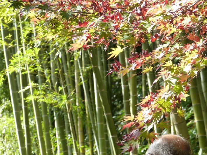 鎌倉散策11月②  長寿寺_f0296312_19254752.jpg