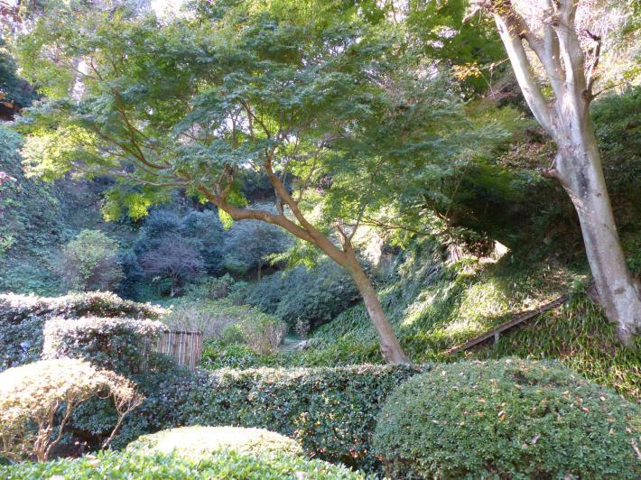 鎌倉散策11月②  長寿寺_f0296312_19255092.jpg