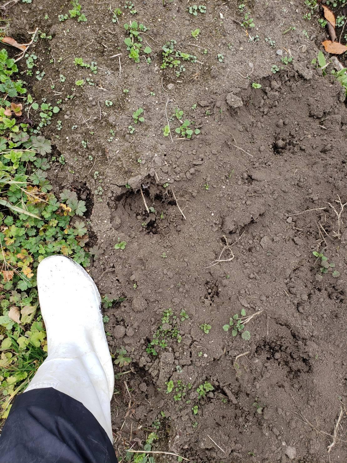 熊の足跡?。_c0300035_17183673.jpg