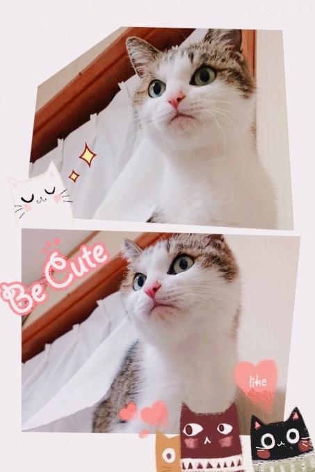 我が家の猫_b0328361_23314438.jpg