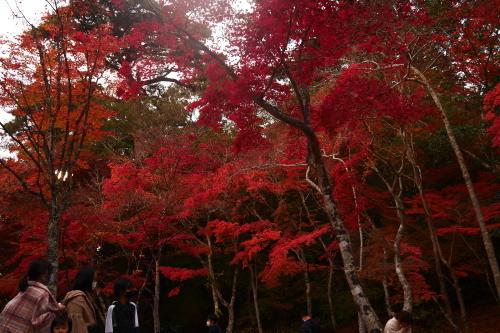 紅葉の季節_f0200477_12203551.jpg