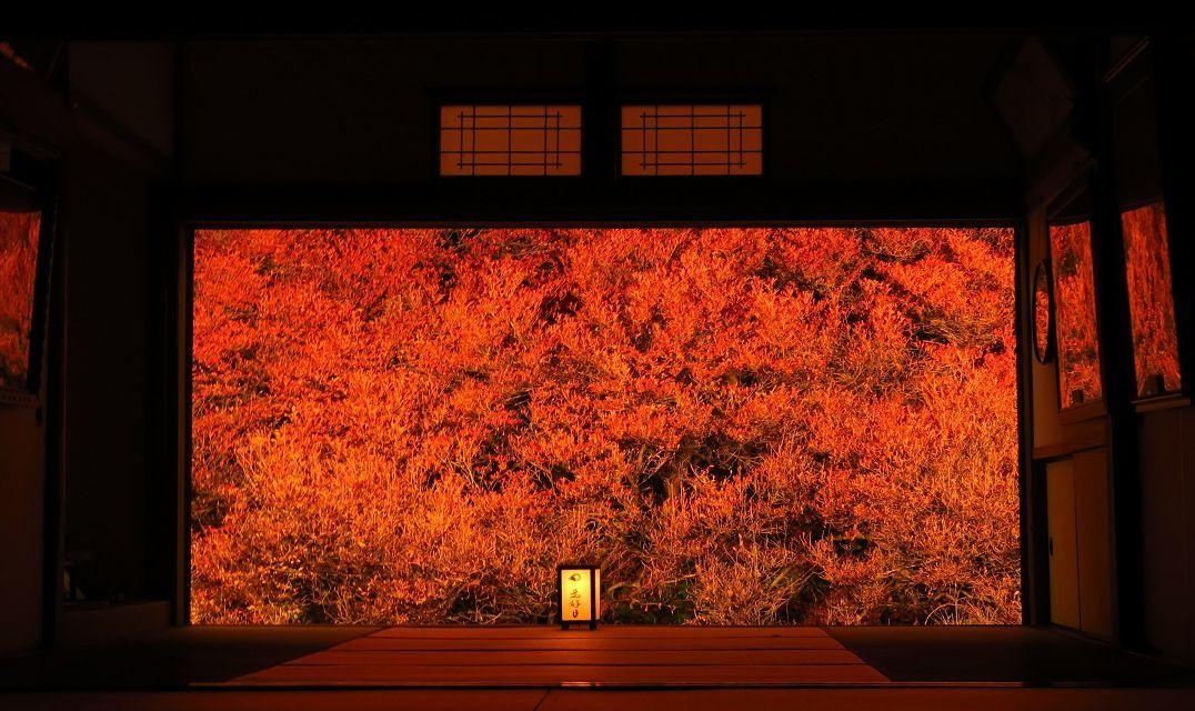 紅葉の季節_f0200477_12520217.jpg