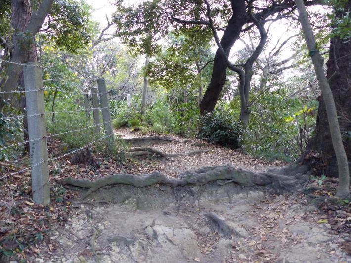 鎌倉散策⑤   大仏ハイキングコース_f0296312_19140966.jpg