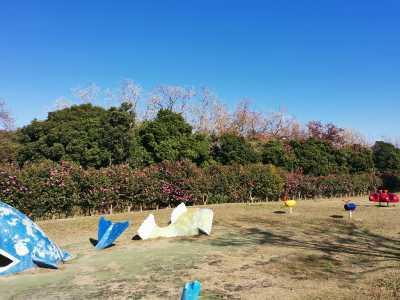 富浜緑地にて、サザンカの花が咲いています♫_d0338682_08540054.jpg