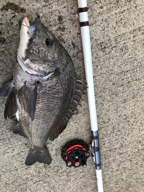 今年はあと何回釣りに行けるかな?_f0079735_13121557.jpg