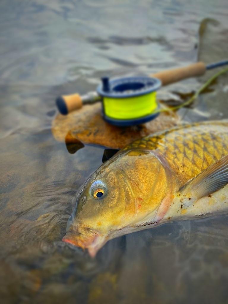 冬季の鯉シーズン始めました。_a0130057_12481991.jpg