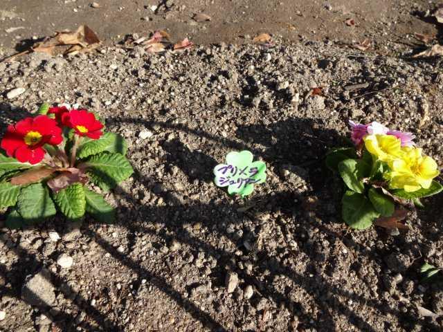 大手銀杏の会さんに花鉢の販売を行いました!_d0338682_15594674.jpg