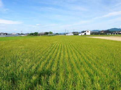 無農薬の『雑穀米』『発芽玄米』『米粉(微細粒米粉)』大好評販売中 稲刈りの様子2020(番外編)_a0254656_17540112.jpg